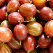 Ripe red gooseberry close up — Stock Photo