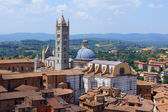 Cathedral of Siena, top view — Stock Photo
