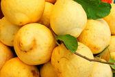 Büyük limon — Stok fotoğraf