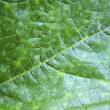 Green leaf — Stock Photo #12713680