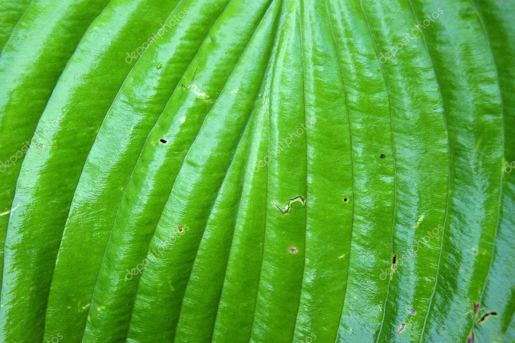 Green leaf of a plant with defects  Stock Photo #12804496