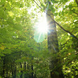 Stock Photo: Light in forest