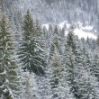 Winter in Carpathians — Stock Photo