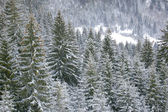 Winter in Carpathians — Foto Stock
