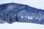 Carpathian mountains in winter — Foto Stock