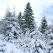 Snow-covered trees — Stockfoto