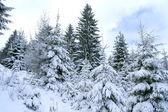 白雪覆盖的树木 — 图库照片