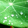 Stock Photo: Dew on leaves