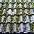 Mossy roof — Stock Photo
