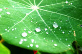 Dew on leaves — Stock Photo