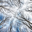 Winter Forrest — Stock Photo #12163898