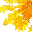 Autumn leaves — Stock Photo #12164212