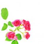 květ — Stock fotografie