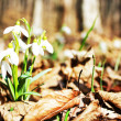 Spring is coming — Stock Photo #12165928