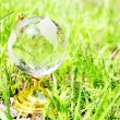 Glass globe on the grass — Stock Photo
