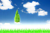 Sky with a tree — Stock Photo