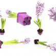 Flower lilac collection — Stock Photo