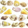 Seshells collection — Stock Photo #13337171