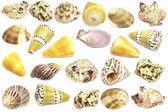 Sea shells collection — Stock Photo