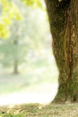 Tree trunk in nature — Stock Photo