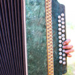 Accordion — Foto Stock
