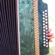 accordion — Stock Photo #13831934