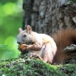 Squirrel in a tree - Stock Photo