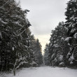 Winter fir forest — Stock Photo #18204969
