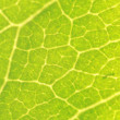 Leaf macro background — Stockfoto