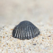Background of sand with shell — Stock Photo #19053663
