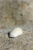 Background of sand with shell — Stock Photo