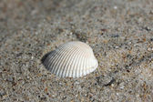 Background of sand with shells — Stock fotografie