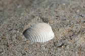 Hintergrund von sand mit muscheln — Stockfoto
