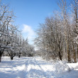 Winter Forest — Stock Photo #20133027