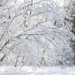 Tree in winter forest - Stock Photo