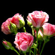 Rose on nintendo background — Stok fotoğraf