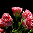 Rose on nintendo background — Stockfoto