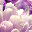 Flower macro petals - Stock Photo