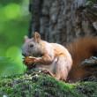 Stock Photo: Squirrel on a tree
