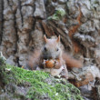 Squirrel on a tree — Stock Photo #23055724