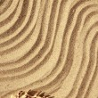 Background sand and seashells — 图库照片