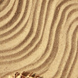 Background sand and seashells — Stockfoto