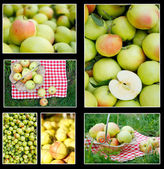 Photo collection of green apples — Stock Photo