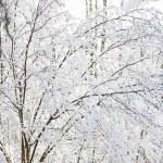 Beautiful winter forest — Stock Photo #36780273