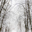 Stock Photo: Beautiful winter forest