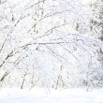 Beautiful winter forest — Stock Photo #36780475