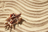 Background of sand with shell — Stockfoto