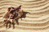 Fond de sable avec shell — Photo