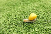 Snail crawling on grass — Stock Photo