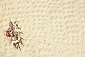 Kabuk kum — Stok fotoğraf